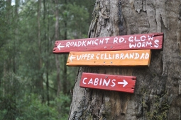 Explore the bush tracks and glow worms near the cabins!